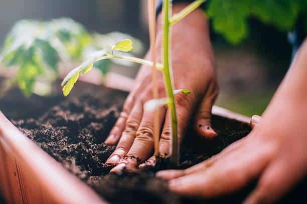 Curso de jardinería y agricultura
